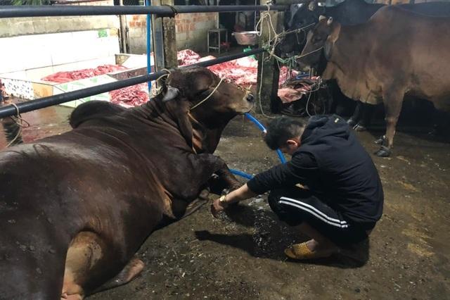 Kinh hãi cảnh bò bị bơm nước, giết thịt trên nền nhà dơ bẩn - 1