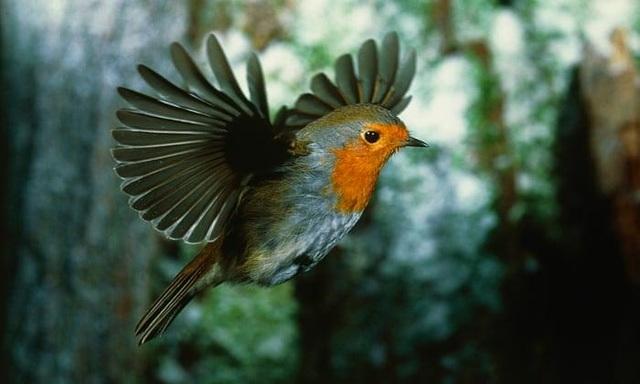 Bí ẩn giác quan lượng tử của loài chim - 1