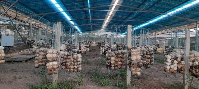 Rà soát, xác minh rõ vụ trá hình dự án nông nghiệp làm điện mặt trời - 2