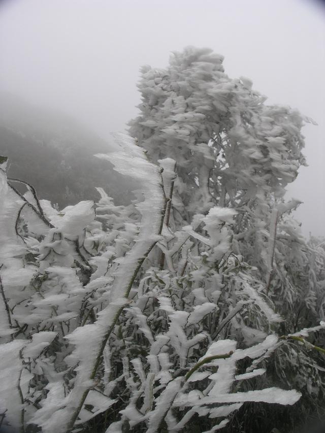 Sa Pa đông cứng trong băng tuyết, đỉnh Khau Phạ cũng hóa đá - 4