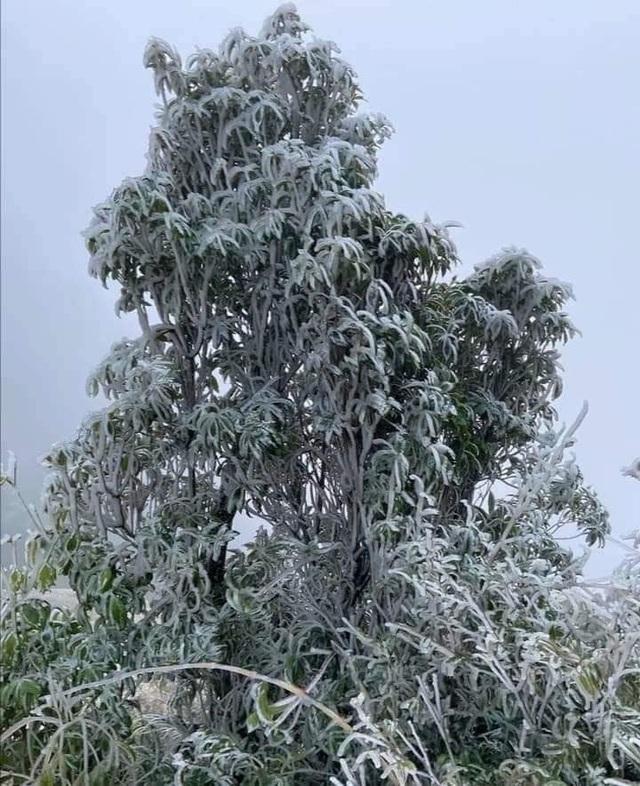 Sa Pa đông cứng trong băng tuyết, đỉnh Khau Phạ cũng hóa đá - 20