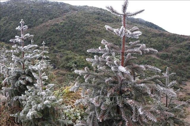 Băng tuyết phủ trắng Cao nguyên đá Đồng Văn - 2