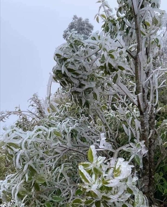 Sa Pa đông cứng trong băng tuyết, đỉnh Khau Phạ cũng hóa đá - 19