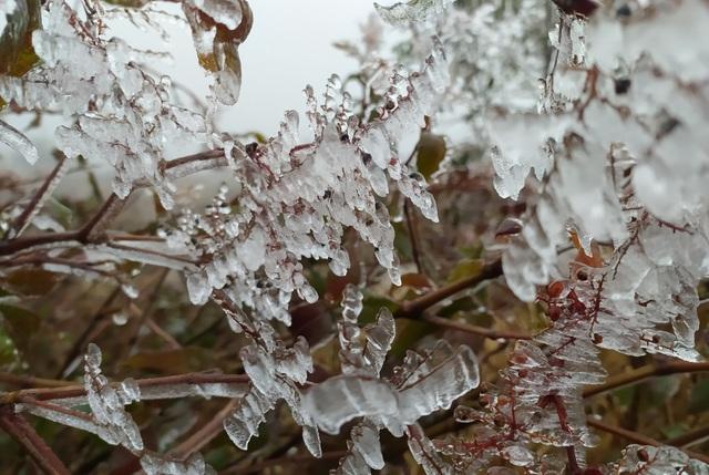 Sa Pa đông cứng trong băng tuyết, đỉnh Khau Phạ cũng hóa đá - 12