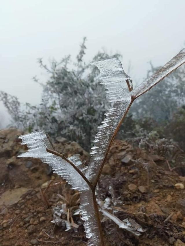 Sa Pa đông cứng trong băng tuyết, đỉnh Khau Phạ cũng hóa đá - 14