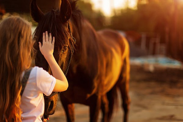 Làm sao biết một con vật đang vui mừng nếu nó không có đuôi để vẫy? - 1