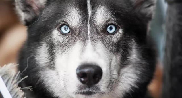 Nuôi chó có thể giúp con người khỏe mạnh hơn - 1