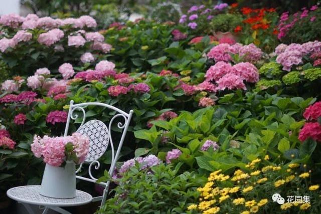 Trồng hoa trên sân thượng, cô gái tạo ra khu vườn cổ tích vạn người mê - 3