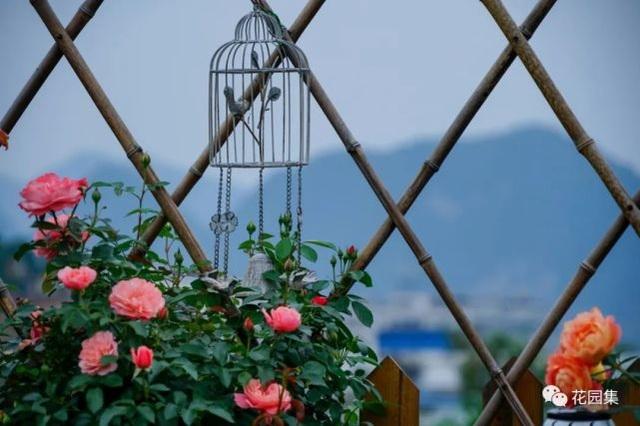 Trồng hoa trên sân thượng, cô gái tạo ra khu vườn cổ tích vạn người mê - 6
