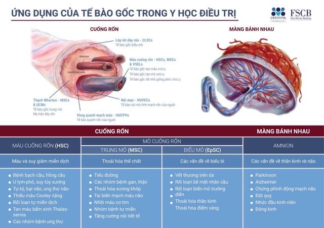 Tế bào gốc: Bước tiến đột phá trong y học hiện đại - 1