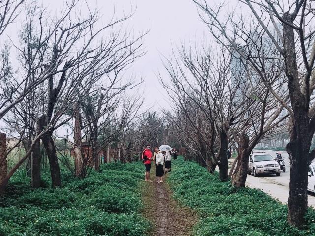 Xót xa con đường mùa đông ở Đà Nẵng bị giẫm đạp tan hoang - 1