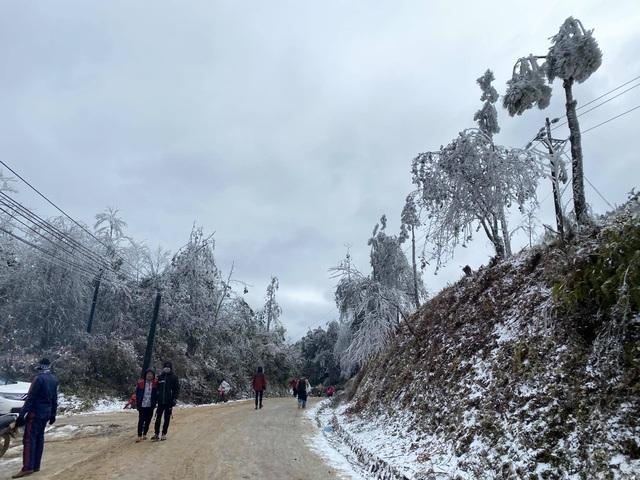 Tuyết rơi trắng xóa ở Lào Cai, du khách đua nhau khoe hình check-in - 9
