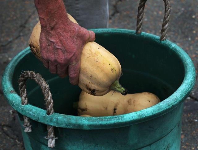 Người đàn ông trồng rau xanh tốt, hoa trái trĩu quả trên... dải phân cách - 4