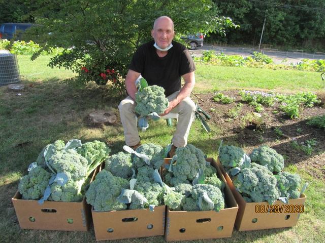 Người đàn ông trồng rau xanh tốt, hoa trái trĩu quả trên... dải phân cách - 7