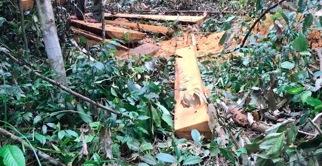Chỉ đạo nóng vụ đoàn xe độ chế rầm rập hút máu rừng xanh Tây Nguyên - 5
