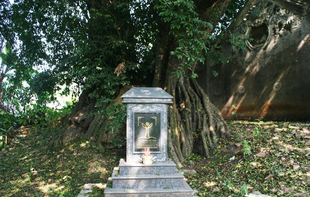 A thrilling story about the treasure of a thousand-year-old sacred tree in Hanoi - 2