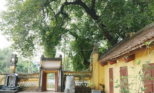 A thrilling story about the treasure of a thousand-year-old sacred tree in Hanoi - 3