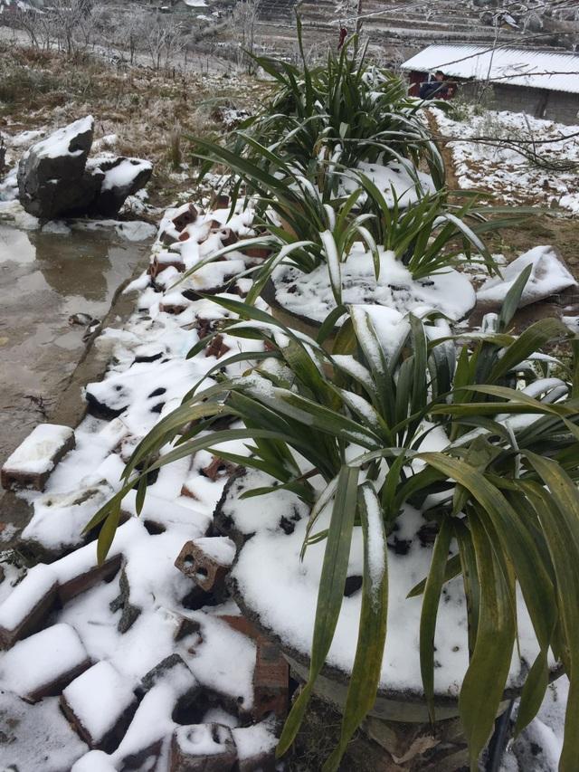Hình ảnh đẹp nhưng buồn sau trận mưa tuyết ở vùng cao Ý Tý - 9