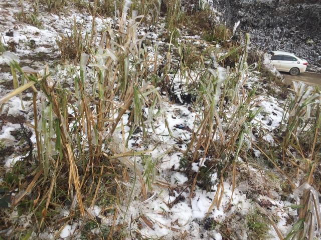 Hình ảnh đẹp nhưng buồn sau trận mưa tuyết ở vùng cao Ý Tý - 10