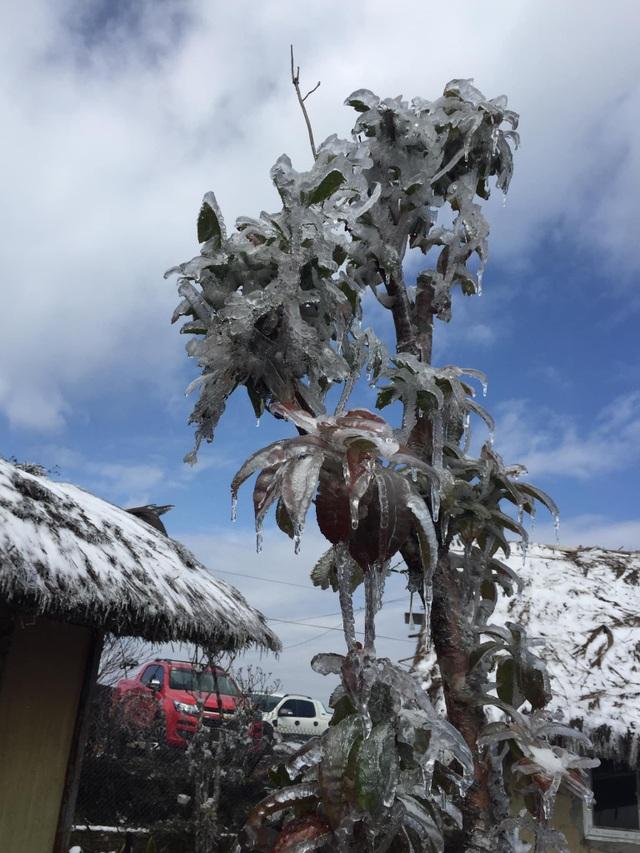 Hình ảnh đẹp nhưng buồn sau trận mưa tuyết ở vùng cao Ý Tý - 6