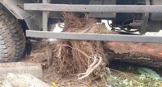 Xe rác mất phanh, tài xế 2 lần tông cây xanh để tránh người đi đường - 2