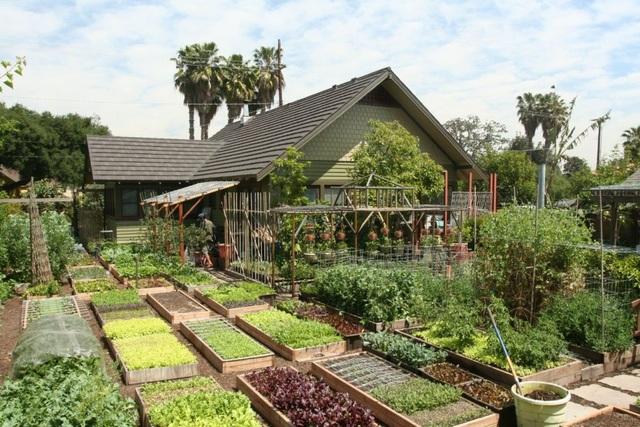 Gia đình biến vườn nhỏ thành nông trại, mỗi năm thu về cả tấn rau - 1