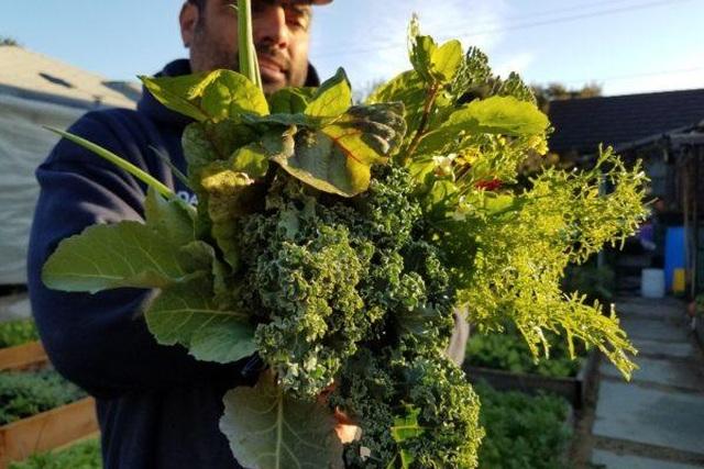 Gia đình biến vườn nhỏ thành nông trại, mỗi năm thu về cả tấn rau - 3