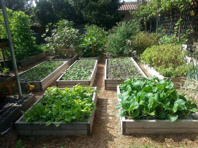 Gia đình biến vườn nhỏ thành nông trại, mỗi năm thu về cả tấn rau - 5