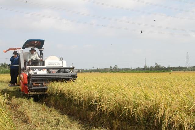 Dự báo mùa khô khốc liệt, người dân không nên xé rào sản xuất lúa vụ 3 - 1