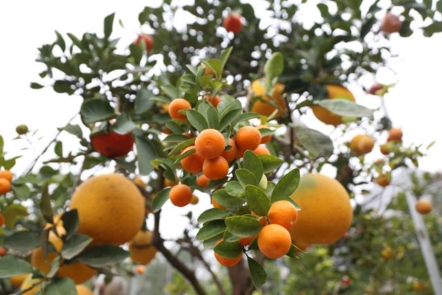 Cận Tết, lão nông thu hàng trăm triệu đồng nhờ cây có 7 thứ quả khác nhau - 2