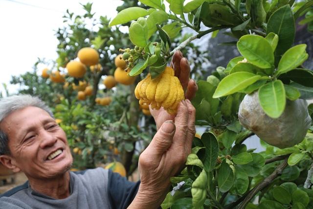 Cận Tết, lão nông thu hàng trăm triệu đồng nhờ cây có 7 thứ quả khác nhau - 3