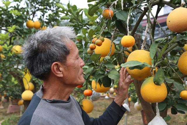 Cận Tết, lão nông thu hàng trăm triệu đồng nhờ cây có 7 thứ quả khác nhau - 12