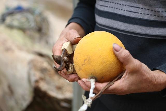 Cận Tết, lão nông thu hàng trăm triệu đồng nhờ cây có 7 thứ quả khác nhau - 11