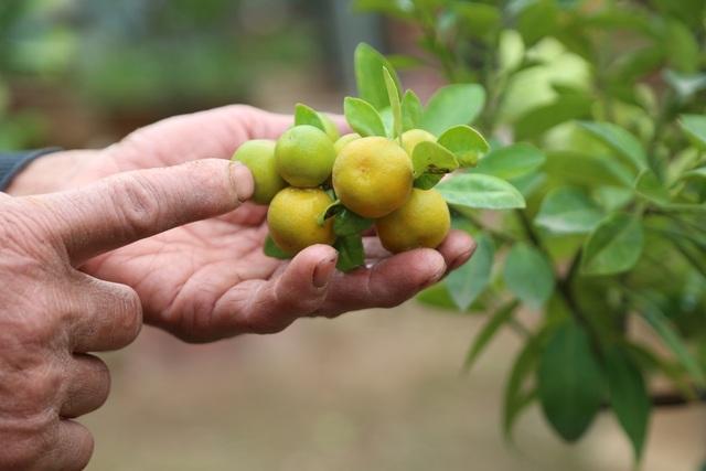 Cận Tết, lão nông thu hàng trăm triệu đồng nhờ cây có 7 thứ quả khác nhau - 6
