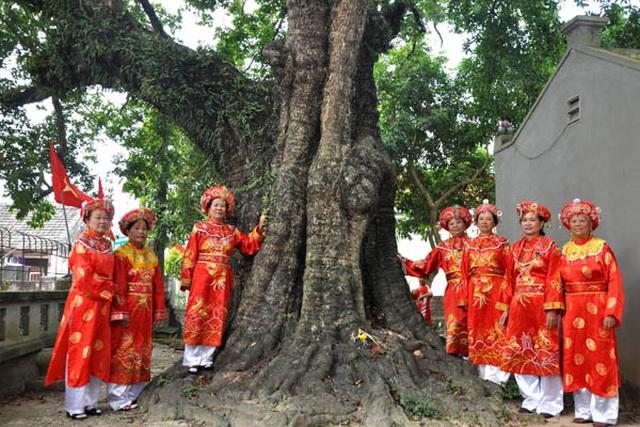 Cụ thị gốc chục người ôm không xuể sống qua 8 thế kỷ ở Ninh Bình - 11