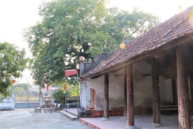 Cụ thị gốc chục người ôm không xuể sống qua 8 thế kỷ ở Ninh Bình - 9