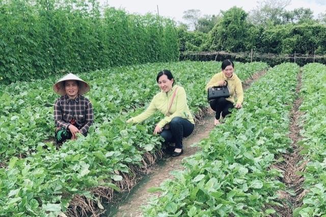 Sóc Trăng: Chị em thoát nghèo nhờ chung tay hùn vốn kinh doanh, trồng màu - 1