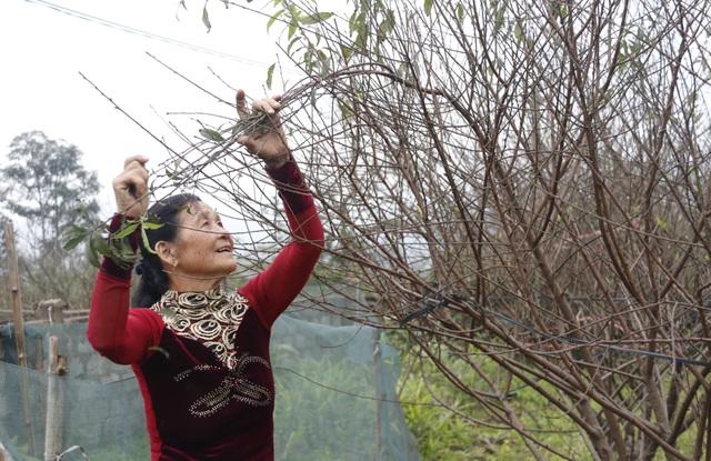 Người trồng đào phấn khởi vì thời tiết hứa hẹn vụ Tết ấm - 6