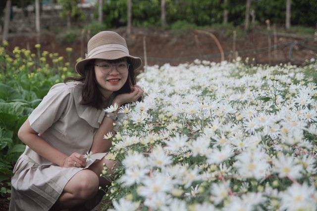 Hoa tam giác mạch, cúc họa mi khoe sắc trên Tây Nguyên - 6