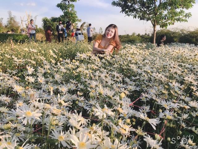 Hoa tam giác mạch, cúc họa mi khoe sắc trên Tây Nguyên - 7
