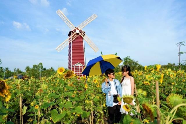Vườn hoa hướng dương lớn nhất TP Sa Đéc mê hoặc người dân miền Tây - 1