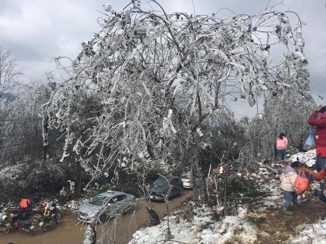 Dự báo mưa tuyết, băng giá xuất hiện ở Sa Pa, Ý Tý - 2