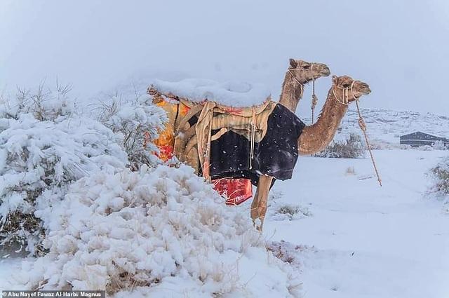 Băng tuyết bất ngờ phủ trắng sa mạc Sahara - 2