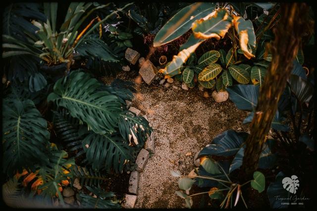 Rừng nhiệt đới thu nhỏ trong quán cà phê ở Đà Lạt - 2