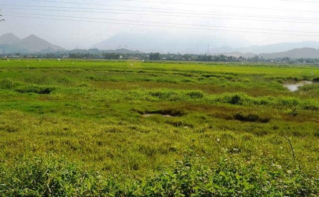 Đà Nẵng: Giá đất nông nghiệp lao dốc chỉ vài chục ngàn đồng/m2 - 2