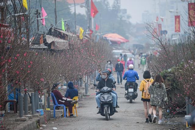 Cảnh hối hả bên trong thủ phủ hoa đào lớn nhất miền Bắc - 12