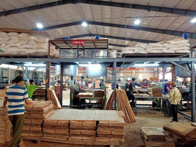 Công ty Minh Long đưa vào vận hành nhà máy sản xuất ván ép hiện đại - 3