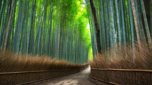 Những bức ảnh có thể giúp bạn thư giãn trong cơn căng thẳng - 3