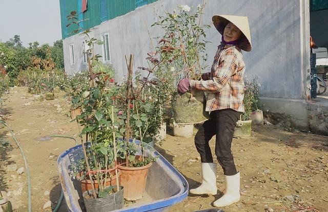 Lao động thời vụ căng sức làm việc, kiếm 300 nghìn/ngày ở các vựa hoa Tết - 3