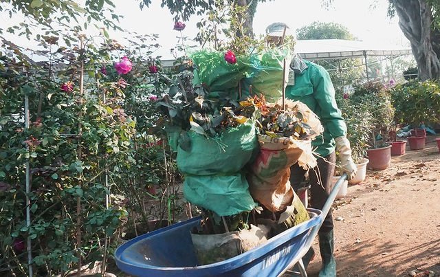 Lao động thời vụ căng sức làm việc, kiếm 300 nghìn/ngày ở các vựa hoa Tết - 2